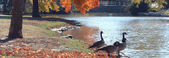 Fall Geese at Lakeside Park