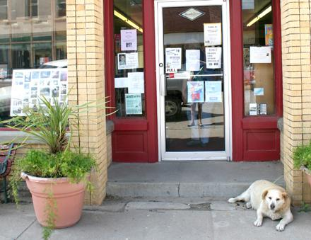 When visiting downtown you might be greeted by the neighborhood pooch.